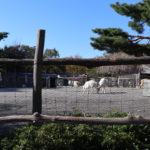 那須高原をキャンプ+αで遊ぶ、南ヶ丘牧場を楽しむ為の方法