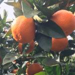 冬キャンプでオススメの南房総 オレンジ村オートキャンプ場の魅力をご紹介します(2/11〜12)